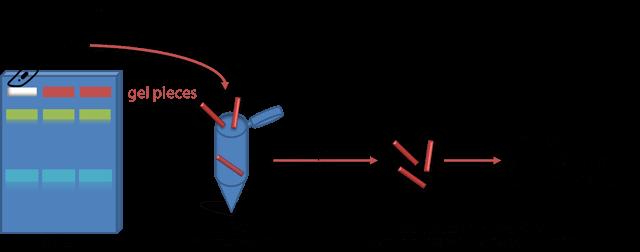 Gelextraktions Schema